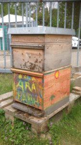 Die  fleißigen Bienchen fühlen sich im neuen Zuhause pudelwohl.